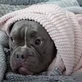 Il se fait attaquer par le chien qu'il voulait adopter, sa réaction laisse tout le monde sans voix (Vidéo)
