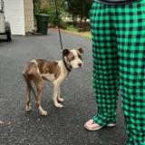 Elle trouve un Pitbull sous une voiture, en s'approchant elle a un énorme choc (Vidéo)