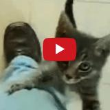 Ces chats prêts à tout pour un câlin vont vous faire craquer ! (Vidéo du jour)