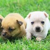 Vous pensiez connaître l'âge humain de votre chien ? Vous aviez tort !