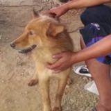 Un chien sauve la vie d'un bébé abandonné dans une poubelle