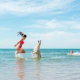 Partir en vacances avec son chien : stop aux idées reçues ! (Edito)