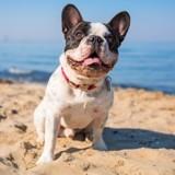 Été 2016 : les plages de France autorisées aux chiens