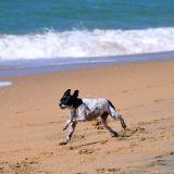 Les plages autorisées aux chiens en 2012