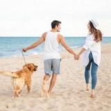 Été 2021 : la liste des plages de France autorisées aux chiens