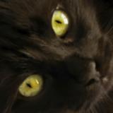 Opération #PerleNoire : vos animaux au pelage sombre sont à l'honneur