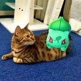 Attention, il se pourrait que vos animaux puissent voir… les Pokémon !
