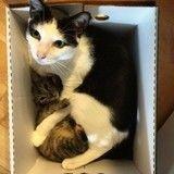 Sauvé d'une mort certaine, ce chat est devenu le papa adoptif de dizaines de chatons orphelins !