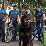 Bagarre en pleine ville : un suspect prend la fuite, mais il a une réaction étrange en voyant le chien policier