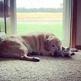 Elle sauve un minuscule chaton : son gros chien s'approche et tout le monde a le souffle coupé (Vidéo)
