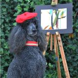 Accrocheriez-vous les oeuvres de ce Caniche peintre sur vos murs ?