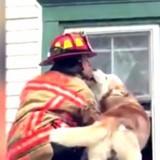 Ce chien embrasse le pompier qui l'a sauvé d'un toit ! (Vidéo)
