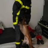 Il attache son chien à sa table et part plusieurs jours : l'explication qu'il donne rend les gendarmes furieux