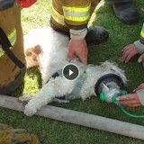De formidables pompiers sauvent la vie d'un chien grâce à un masque à oxygène ! (Vidéo)
