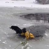 Les pompiers sauvent un chien d'un lac gelé, sa réaction est très émouvante