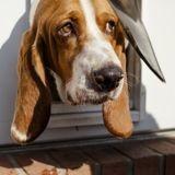 Le toutou emprunte la porte pour chien : ce qu'il se passe ensuite fait hurler de rire sa famille !