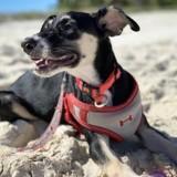 Attention, destination de rêve : des chiens et des plages paradisiaques au programme