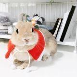Découvrez Poteto, la lapine la plus craquante du Web !