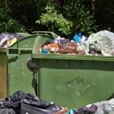 Découverte choquante : il entend un bruit provenant de la poubelle, ce qu'il découvre parmi les détritus lui brise le cœur (vidéo)