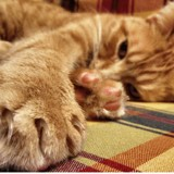 Pourquoi mon chat me griffe ou me mord ?