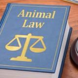 Ce 29 mars, la Déclaration de Toulon va faire avancer le droit animal !