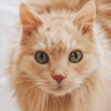 Une banque russe prête des chats à ses clients venant d'acheter une maison