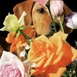 12 chiens qui profitent du printemps comme il se doit !