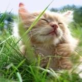 10 magnifiques photos qui prouvent que le printemps est la saison préférée des chats