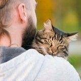 Un amoureux de chats se fait condamner à 54 jours de prison