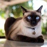 Un chat sauve sa famille d'une intoxication au monoxyde de carbone