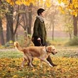 Paris envisagerait d'autoriser les chiens dans plus d'espaces verts