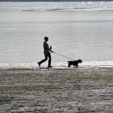 En Chine, de nouvelles mesures législatives sur les horaires de promenades des chiens