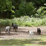 Et si votre chien testait la promenade éducative collective ?