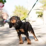 Il refuse de ramasser les crottes de son chien : le tribunal de police le condamne