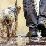 Comment réagir quand un chien refuse de marcher sous la pluie ?