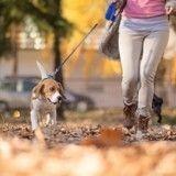 Un parc à chiens vient d'ouvrir à Paris !