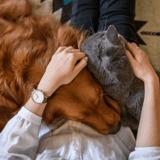 Maltraitance animale : le Sénat revient sur plusieurs propositions importantes du projet de loi