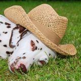 Les gadgets pour chien de l'été... à ne pas manquer !