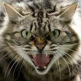Idées reçues  : 6 raisons pour lesquelles votre chat n'est PAS un psychopathe