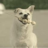 Un jeune homme nourrit un chien errant et se fait un ami dévoué (Vidéo du jour)
