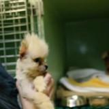 Retrouvé torturé au milieu des ordures à Paris, Puccino va mieux (Vidéo)