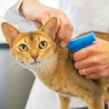 Identification du chat obligatoire : comment choisir entre puce et tatouage ?