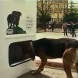 Un distributeur écologique et solidaire pour nourrir les chiens errants