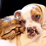 Faites connaissance avec la chienne Puka et sa meilleure amie la tortue (Photos)