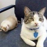 Pumpkin, le chat qui s'est lié d'amitié avec un rat