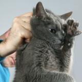 Pourquoi il ne faut jamais punir votre chat quand il a fait une bêtise ?