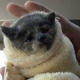 Abandonné dans un immeuble, ce chaton découvre les câlins (Photos)