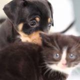 Quand chatons et chiots se découvrent pour la première fois (Vidéo du jour)