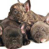 Puppyhood, un concentré de tendresse à travers des photos de chiots