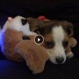 Un chiot, un chien et une fillette découvrent un drôle de nouveau compagnon… (Vidéo du jour)